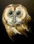 Haunting Owl