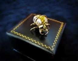 Jewelry box cicada