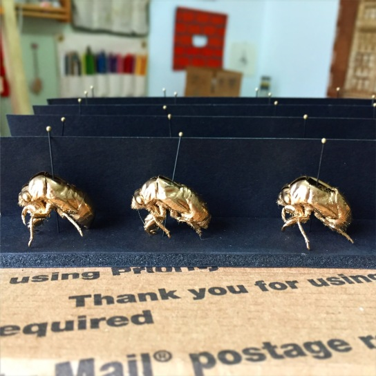 Packing up cicadas for a show!