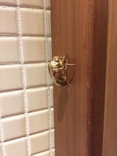 Cicada friend hidden in a bathroom....Come find me!