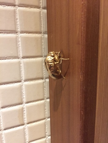 Cicada friend hidden in a bathroom....Come find me!