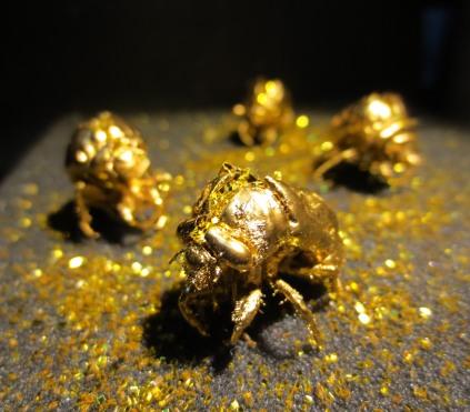 The making of jewelry-box cicadas