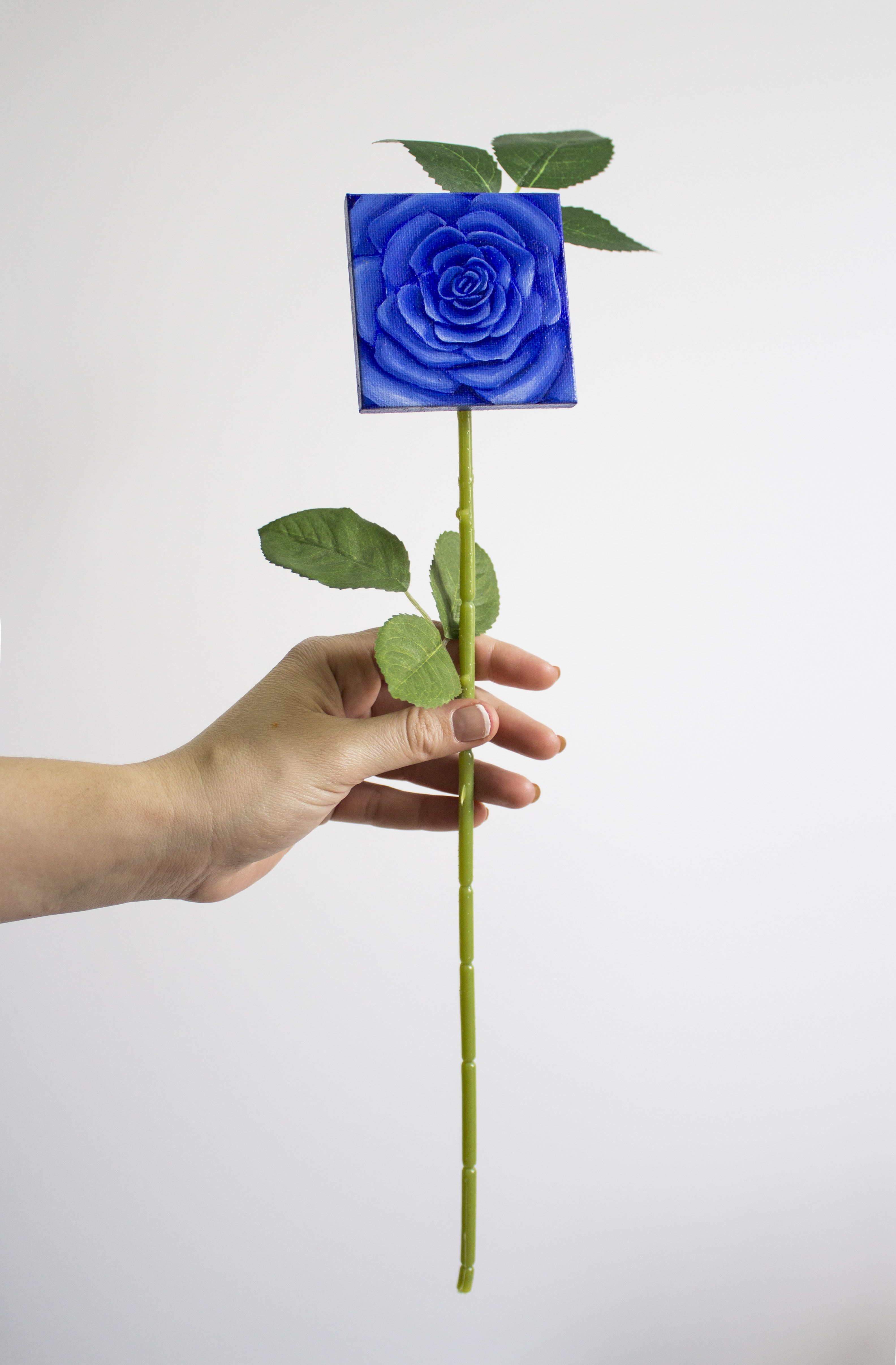 Multicolor Forever Rose_Blue Rose 1
